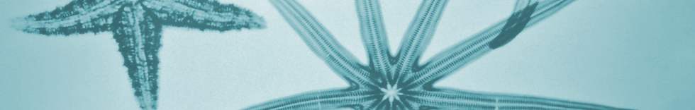 starfish-header2-blue2