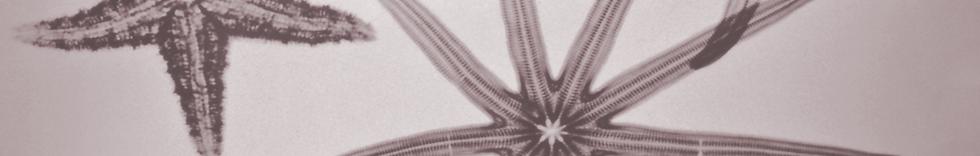 starfish-header2-red